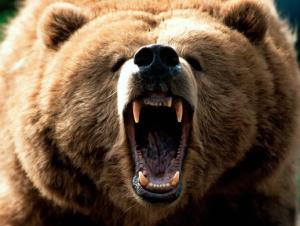 You a scary bear kid